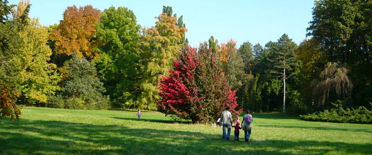 arborétum, növénygyűjtemény