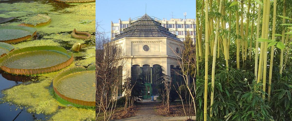 Budapest Füvészkert