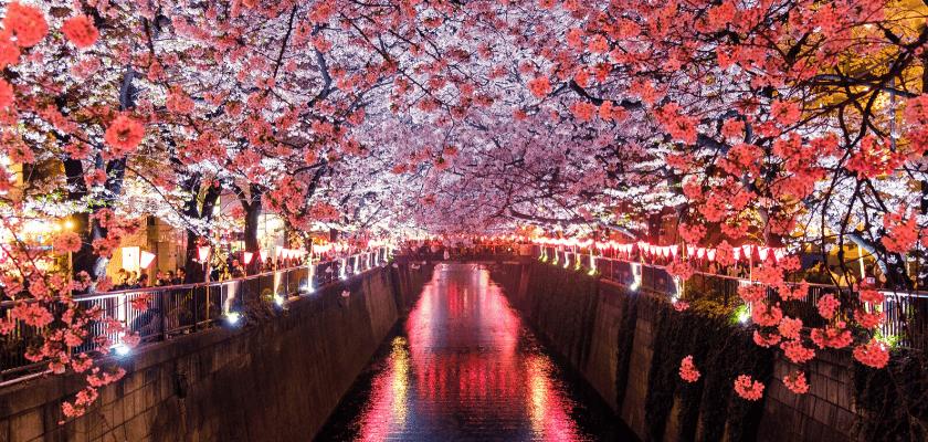 a sakura része a jozakura