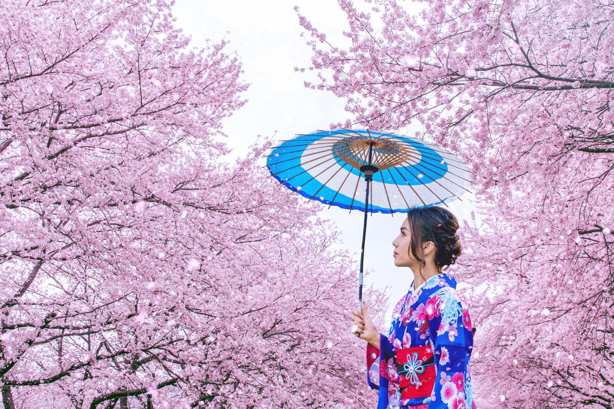 Sakura Japánban